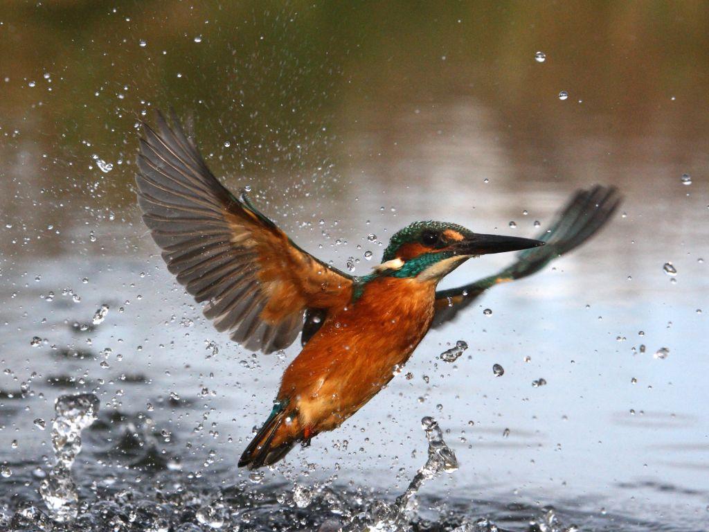 Waterway Wildlife